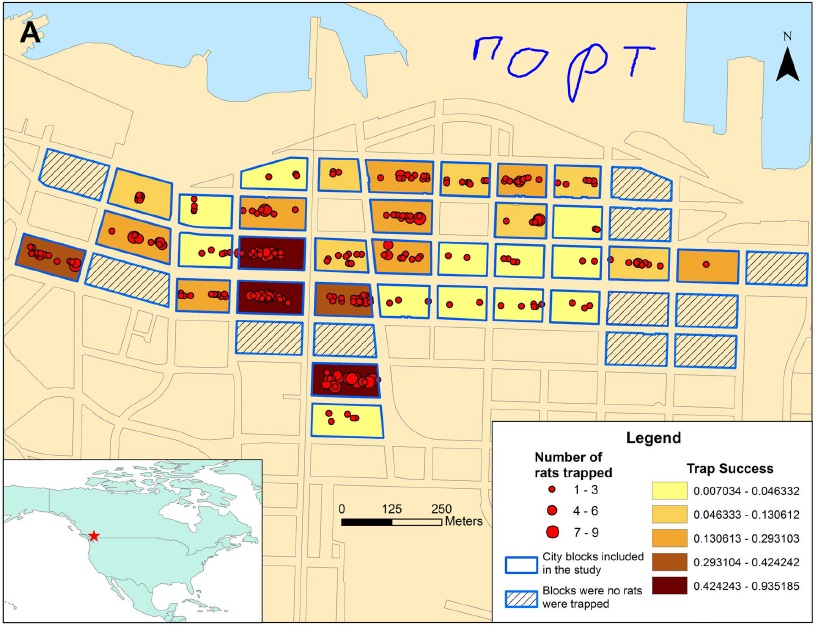 rats_in_vancouver-map.jpg