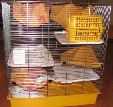 Архивы Корма для собак 1st Choice - Acana 72